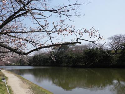 20120329_24.jpg